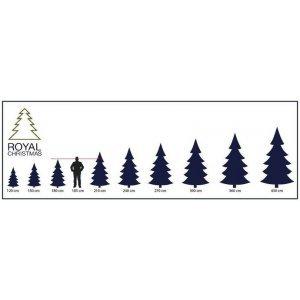 Елка Royal Christmas Dakota Green - HOLLAND (2.4 метр) 98505